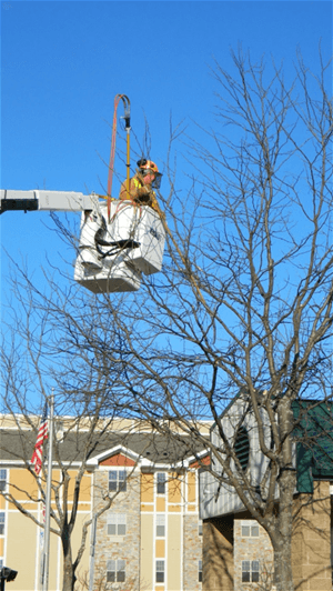 A city worker trimming a tree.