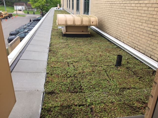 Green Roof on the Roof of City Hall